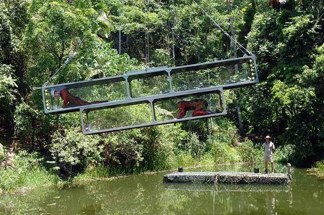 Dschungelprüfung über dem Teich