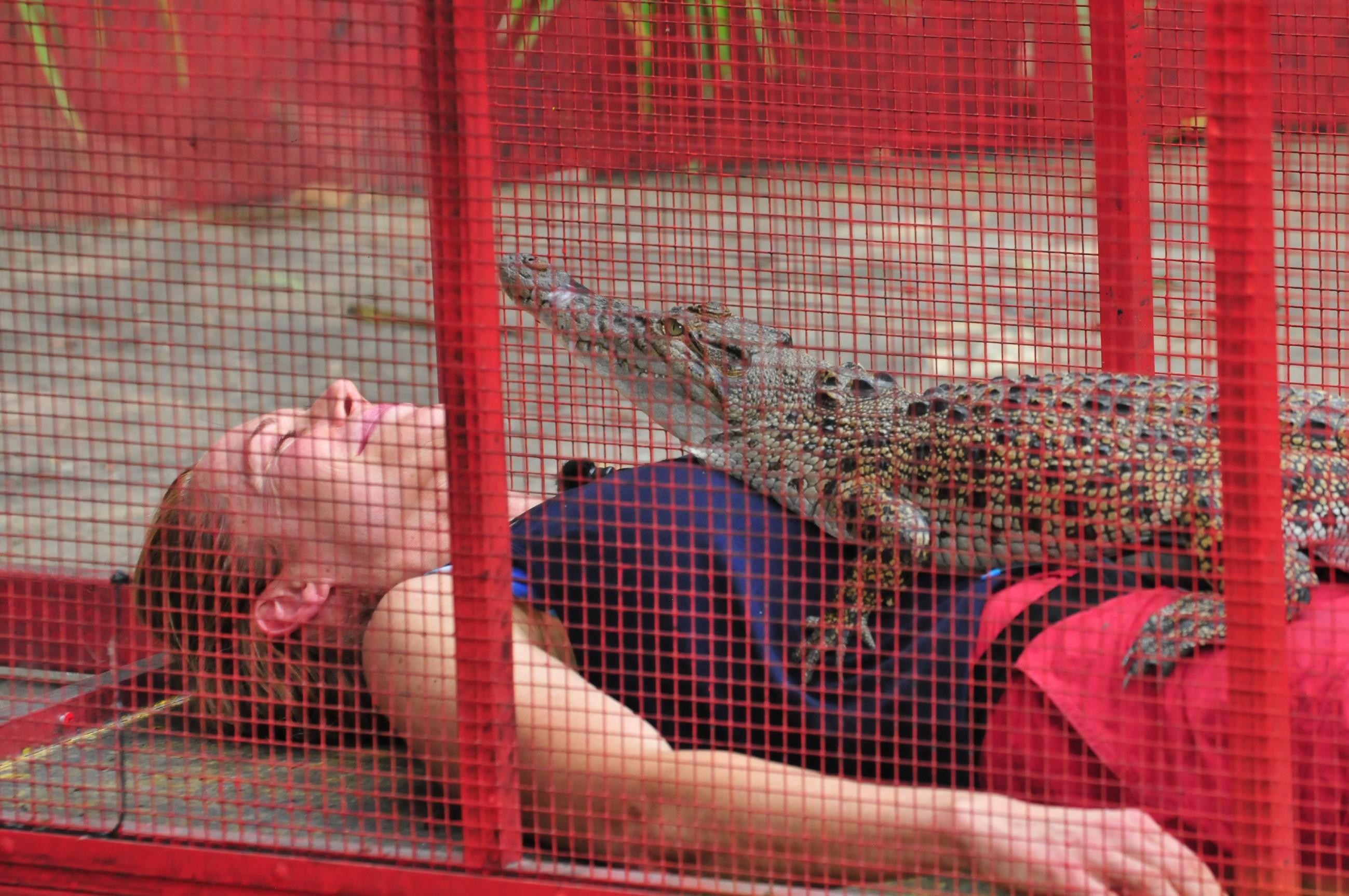 Doreen in der Dschungelprüfung mit Krokodil auf dem Bauch
