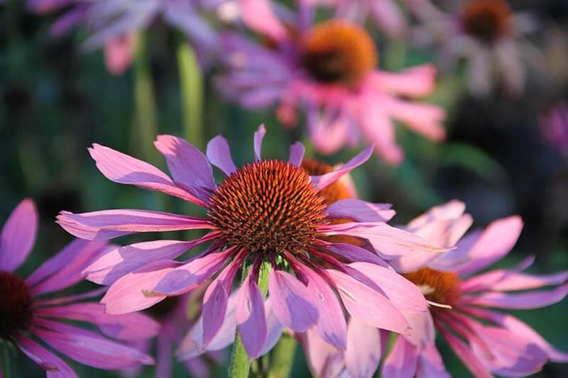 Blumen-Glück