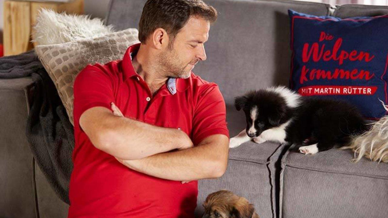 Neue Hundesendung Mit Hundeprofi Martin Rutter Die Welpen Kommen
