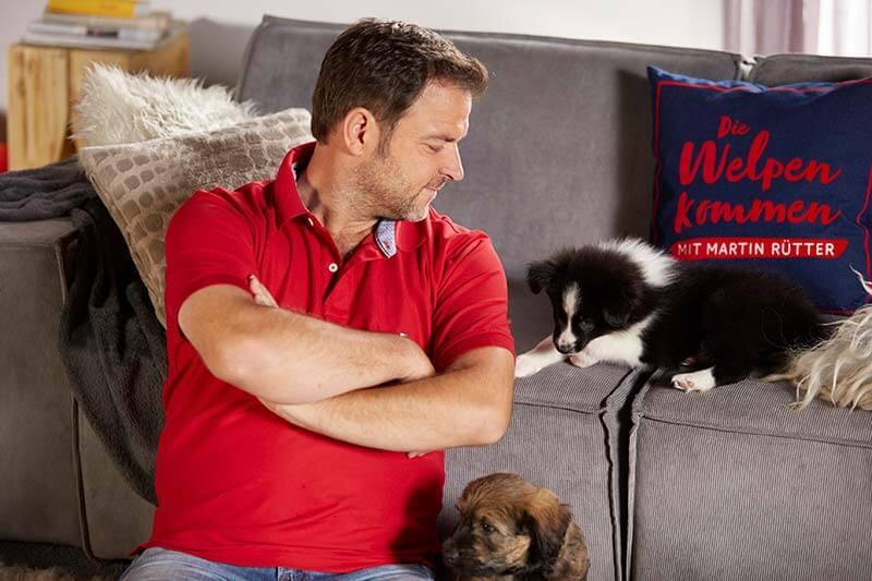 Neue Hundesendung mit Hundeprofi Martin Rütter - Die Welpen kommen