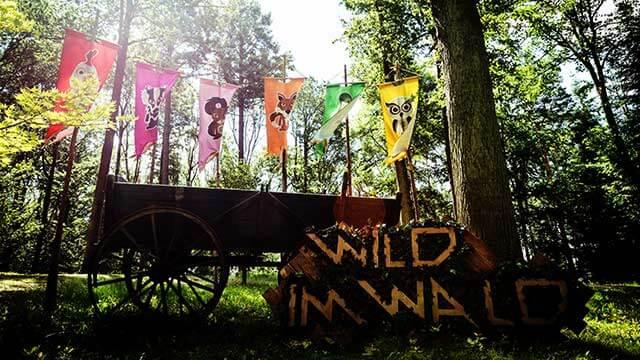 Gameshow Wild im Wald